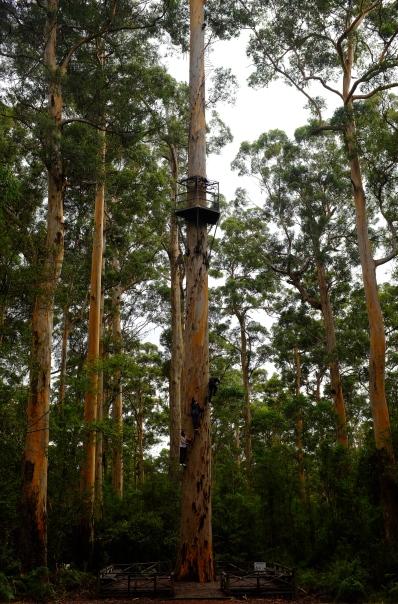 tree climbing denmark